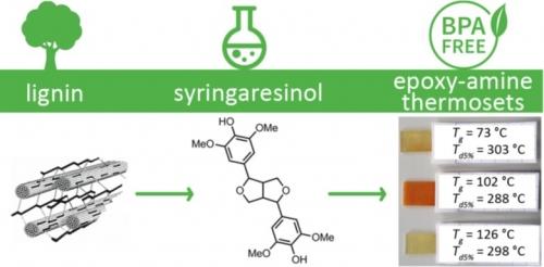 Résine à bae de syringarésinol