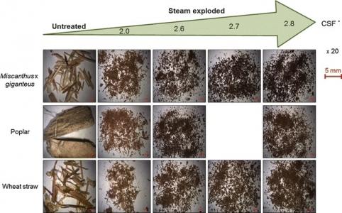 Biomasse explosée à la vapeur